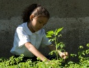 Using CCTs to Reduce Child Labor and Improve the Quality of Work that Children Perform.