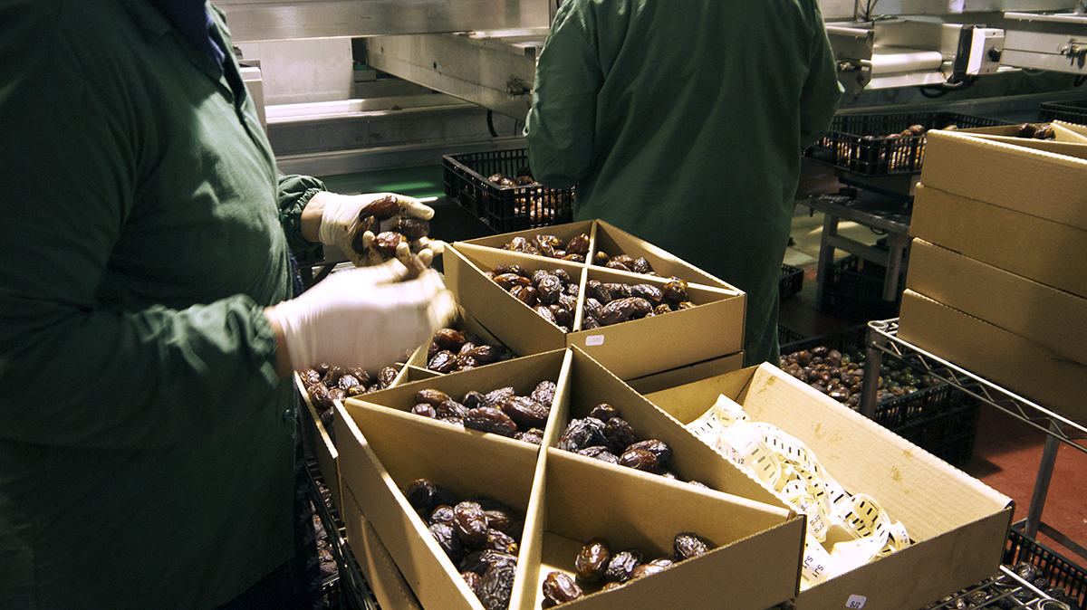 packing dates for Nakheel Palestine for Agriculture Development